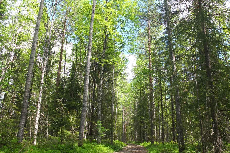Swedish-lapland-forrest-hike