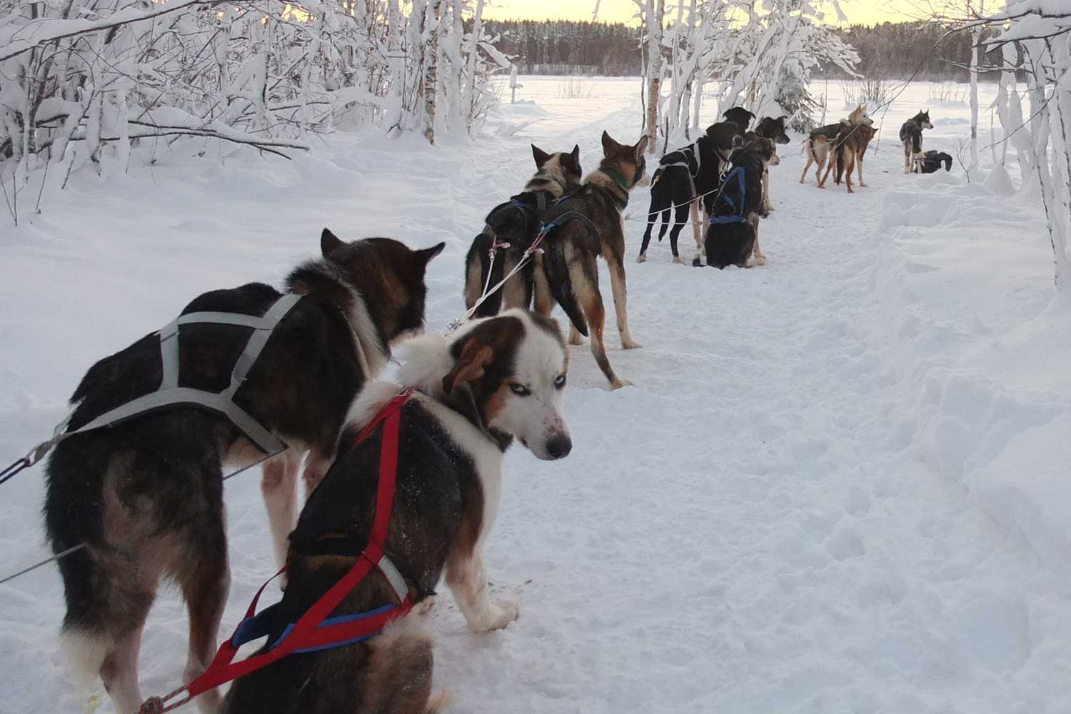 Winter holidays 2018. Husky town in the resort of Bath 26