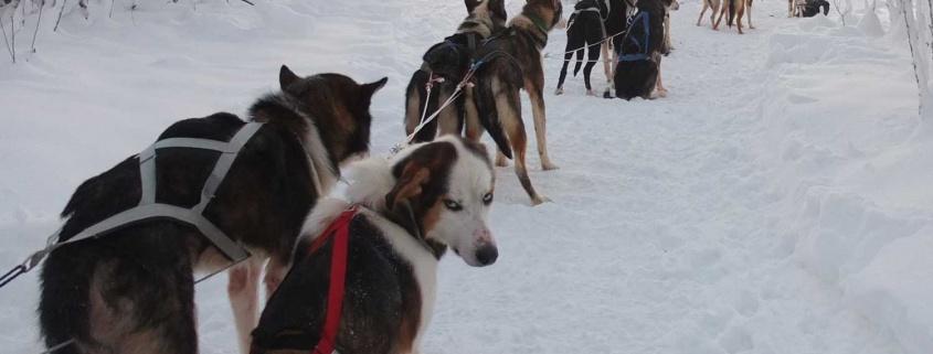 dog sled tours lulea