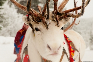 Jokkmokk-Winter-Market-Sweden