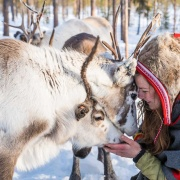 sami culture experience