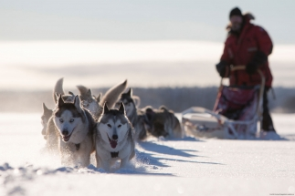Dog sledding tour with Husky's