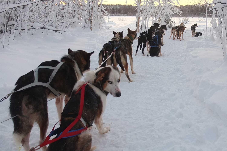 Zweeds Lapland reis