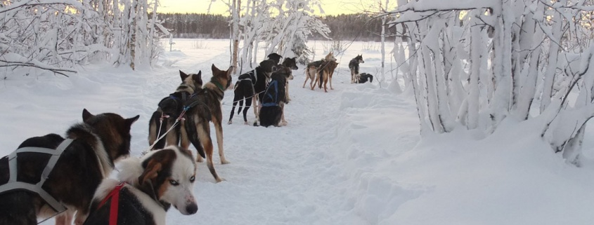 Swedish Lapland Winter Holiday