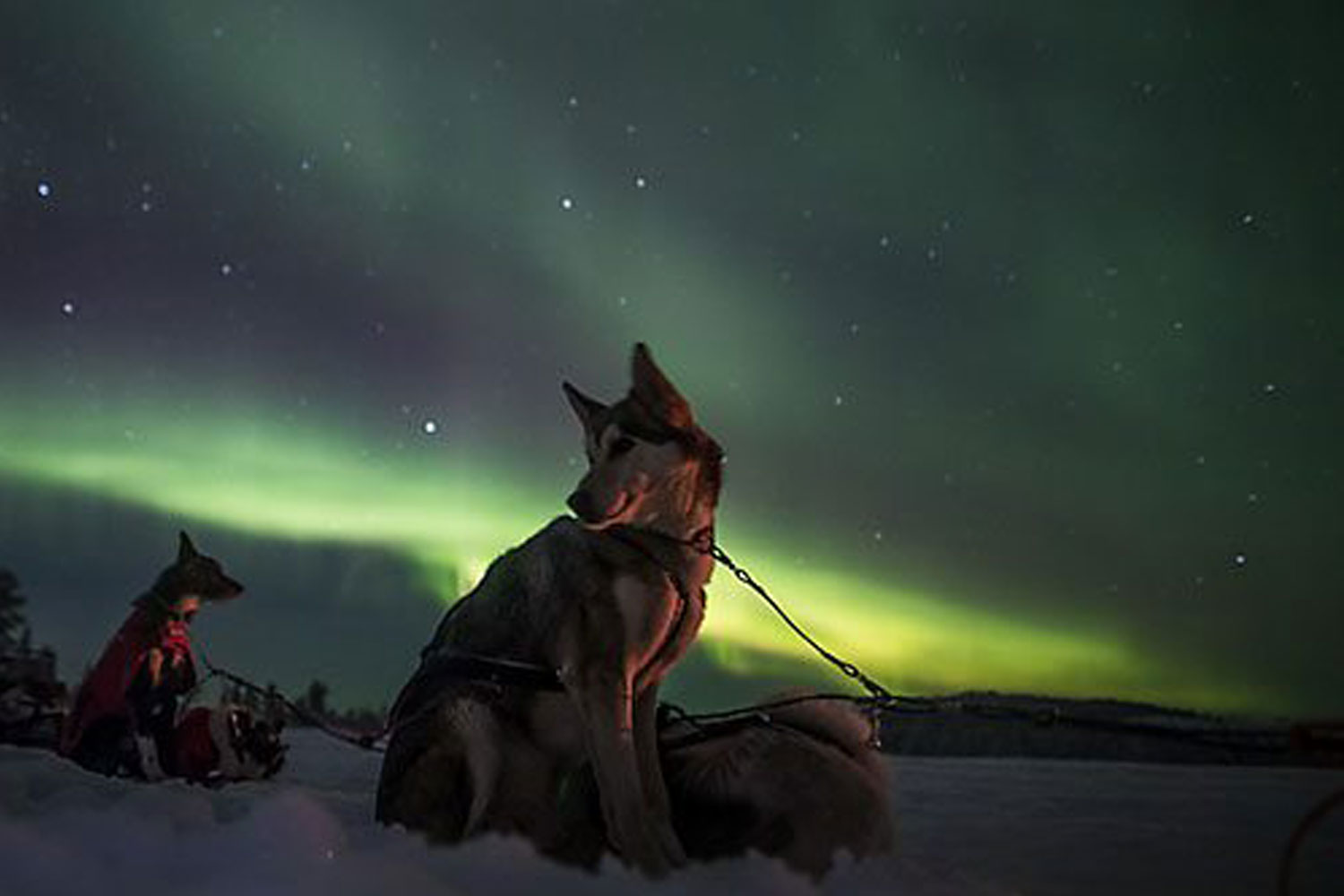dogsled northern lights