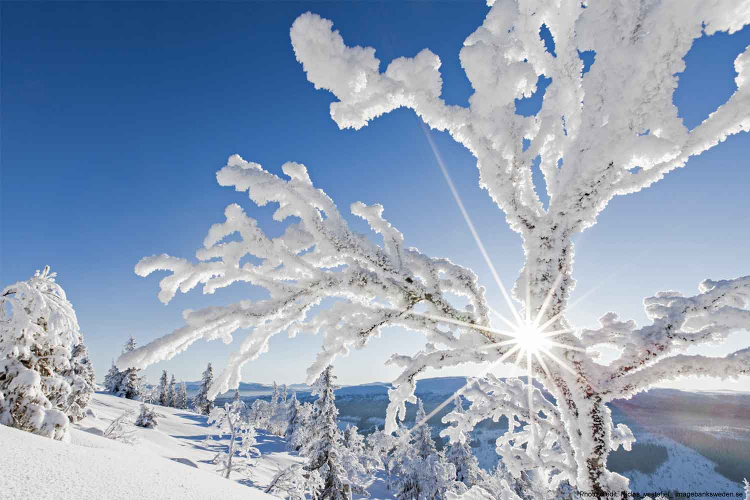 Winter-holiday-lapland