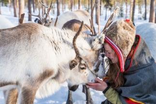 sami-culture-reindeers-wint