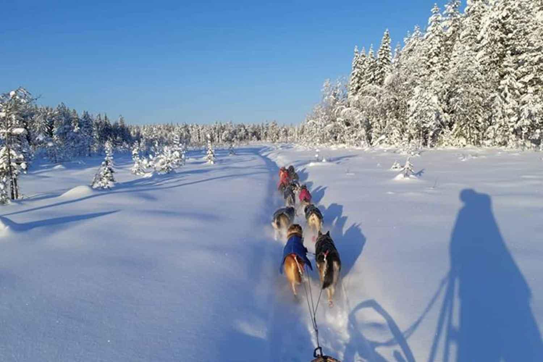 dog-sled-lulea-long-tours