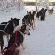 Zweeds Lapland Lulea