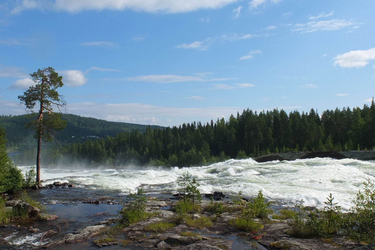 guided tours storforsen